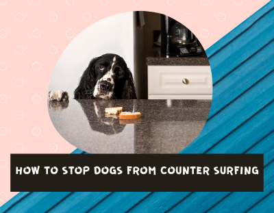 how-to-stop-a-dog-from-counter-surfing