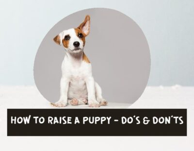 HOW-TO-RAISE-A-PUPPY