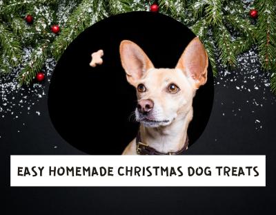 Easy-Homemade-Christmas-dog-treats