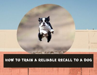 how-to-train-a-dog-to-come-when-called