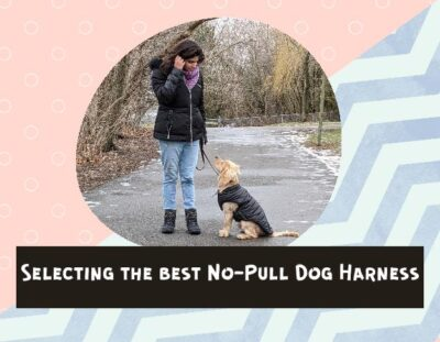 best-dog-harness-for-pulling