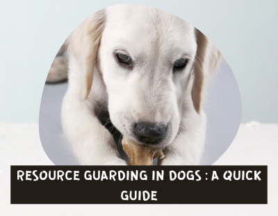RESOURCE-GUARDING-IN-DOGS
