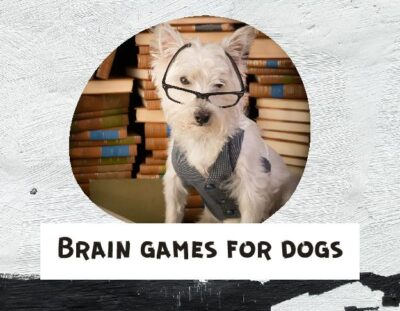 brain-games-for-dogs