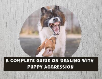 HOW-TO-STOP-PUPPY-AGGRESSION